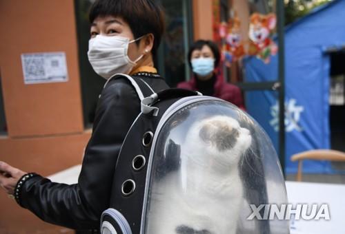 고양이도 코로나19 조심해야…감염률 15% 달해