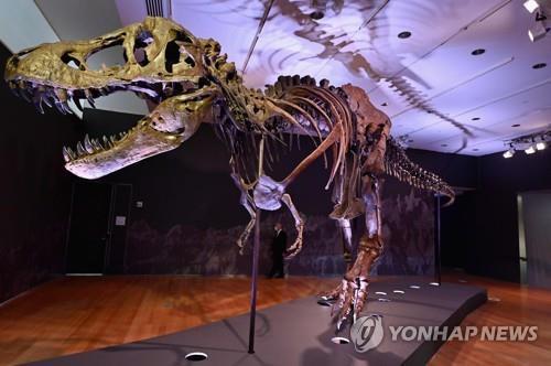 티라노사우루스 화석 뉴욕 경매 나와…예상 경매가 800만달러