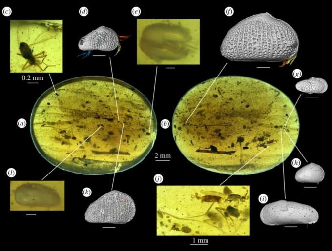 호박 화석 속에서 발견된 패충류들의 모습이다. 몸의 형태가 그대로 남아 있을 정도로 보존 상태가 좋다. 영국왕립학회보 B 제공