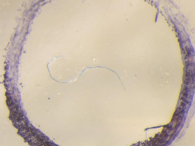 캐나다 연구팀이 캐나다 오대호에서 실제 수집한 청바지 미세섬유 조각. 토론토대 제공