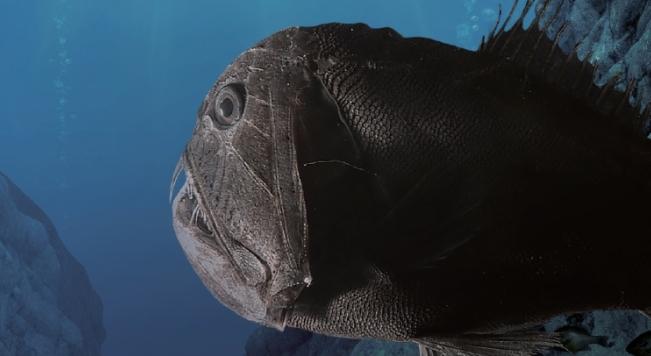 오네이로데스(Oneirodes sp.) 최저반사율이 0.044%로 육지의 나비나 극락조보다 더 검은 색을 띤다. 피부 세포질의 멜라노솜이 길고 빽빽하게 놓인 구조로 빛의 흡수율을 극대화한다. Karen Osborn, Smithsonian National Museum of Natural History 제공