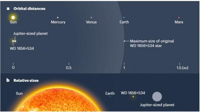 백색왜성 WD 1856+534와 목성 크기 행성의 거리는 태양과 지구 거리의 2%에 불과하다. WD 1856+534는 적색거성일 때 반지름이 태양과 지구 거리에 육박했을 것으로 보인다(위). 태양과 지구, WD 1856+534, 목성 크기 행성의 크기를 비교했다(아래). 네이처 제공