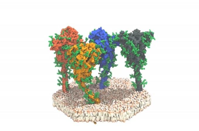 코로나19 바이러스의 스파이크 단백질. Sören von Bülow, Mateusz Sikora, Gerhard Hummer/MPI of Biophysics 제공.