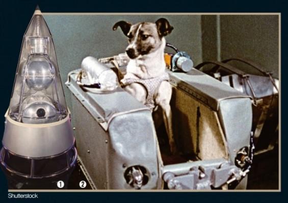 [잠깐과학] 최초로 지구 궤도에 오른 동물 라이카, 우주로 떠나다