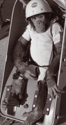 미국은 1960년대까지 우주 실험에 영장류를 사용했다. '햄'이라는 침팬지는 1961년 우주에 진출하여 최초로 우주에 도달한 유인원이 되었다. NASA 제공