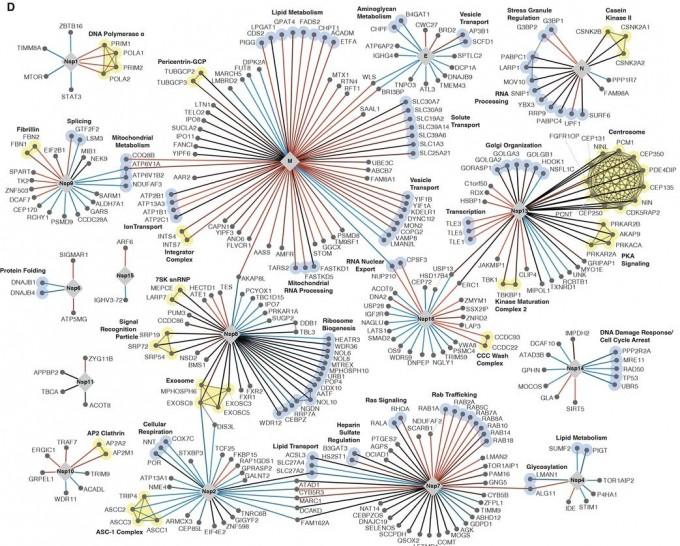 사스코로나바이러스-2와 1, 메르스코로나바이러스와 인간 세포간 상호작용을 모두 모아 정리한 인터랙톰이다. 사이언스 제공