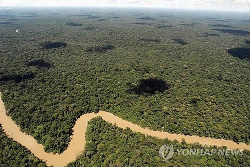 아마존 나무 더 빨리 자라지만 일찍 죽어 CO₂저장력↓