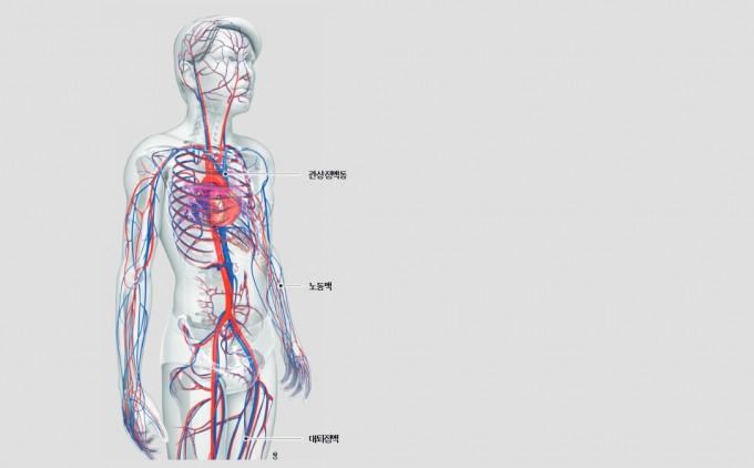 미국 펜실베니아대 연구팀이 심장에서 흡수되거나 방출되는 물질을 정량적으로 분석했다(탄소 함량 기준). 연구팀은 세 가지 혈관(관상정맥동, 노동맥, 대퇴정맥)에서 혈액을 채취해 포도당을 쓰는 다리 근육과 달리 심장에서는 지방산 소비량이 많다는 사실을 알아냈다. 오른쪽 그래프는 심장과 다리에서 나타나는 물질별 탄소 흡수량과 방출량 차이다. 게티이미지뱅크 제공