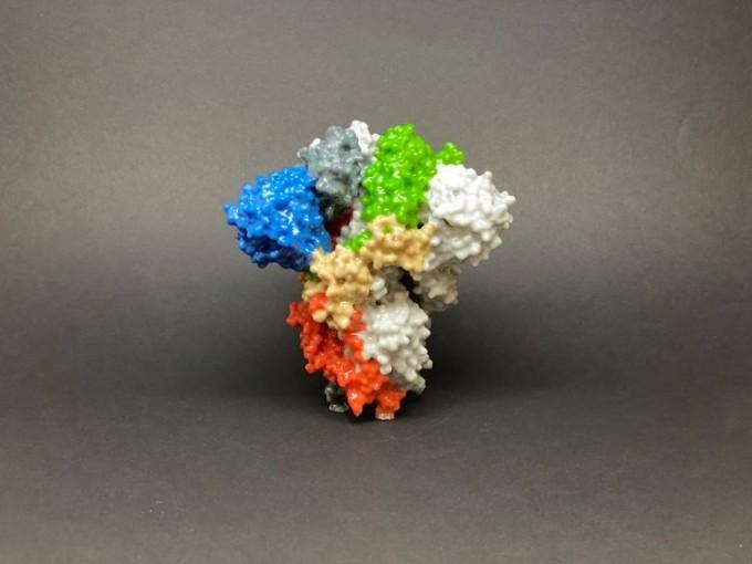 코로나19를 일으키는 사스코로나바이러스-2(SARS-CoV-2).미국 국립알레르기전염병연구소(NIAID) 제공