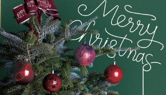 크리스마스 트리는 알고보면 '한국산'··· 멸종위기의 구상나무를 구하라