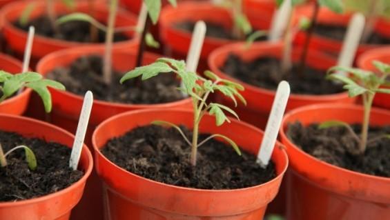 식물도 냄새 맡고 안다…유익균인지 병원균인지를