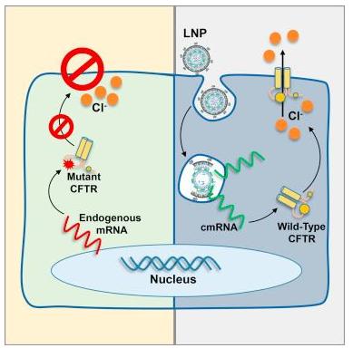 닝포성 섬유종을 치료하는 mRNA 나노파티클의 원리. 몰레큘러 테라피 제공