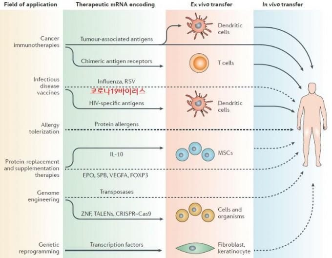 시험관에서 만든 mRNA를 몸에서 꺼낸 세포에 넣거나(ex vivo) 몸에 바로 넣어(in vivo) 단백질을 만들게 하면 다양한 질병을 치료하거나 예방할 수 있다. 또 게놈 편집이나 세포 재프로그래밍에도 유용하게 쓰일 수 있다. 최근 코로나19 RNA 백신이 성공하면서 mRNA 의약품 시대가 열렸다.  '네이처 리뷰스 약물발견' 제공