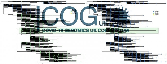 영국 정부는 코로나19 환자의 혈장에서 채취한 바이러스 게놈(유전체)을 해독하는'COG-UK' 컨소시엄을 꾸려 바이러스 변이를 추적해왔다. 최근변이 바이러스를 맨 처음 확인한 곳도 이 컨소시엄이다.COG-UK 제공
