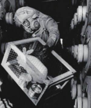 1970년, 미국 콜로라도에 위치한 가스 생산 시설에서 유독성 '사린 가스' 누출이 있는지 알아보기 위해 감시종 토끼를 데리고 들어간 모습. 미국 의회도서관 제공