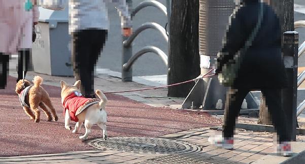 24일 오후 서울 중구의 한 거리에서 시민이 반려견과 산책하고 있다. 정세균 국무총리는 이날 코로나19 중앙재난안전대책본부 회의에서 국내에서 반려동물의 코로나 바이러스 감염증 첫 확진 사례를 발표했다. 연합뉴스 제공