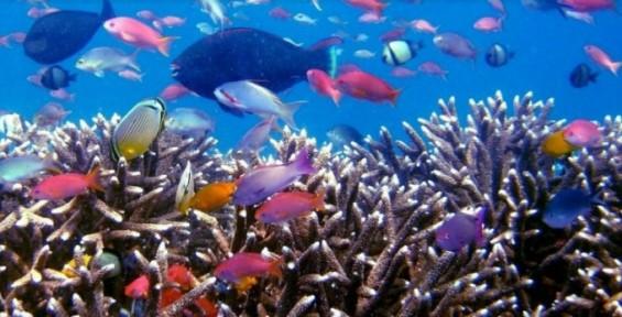 [인간 행동의 진화] 열대어의 화려함은 투쟁의 산물