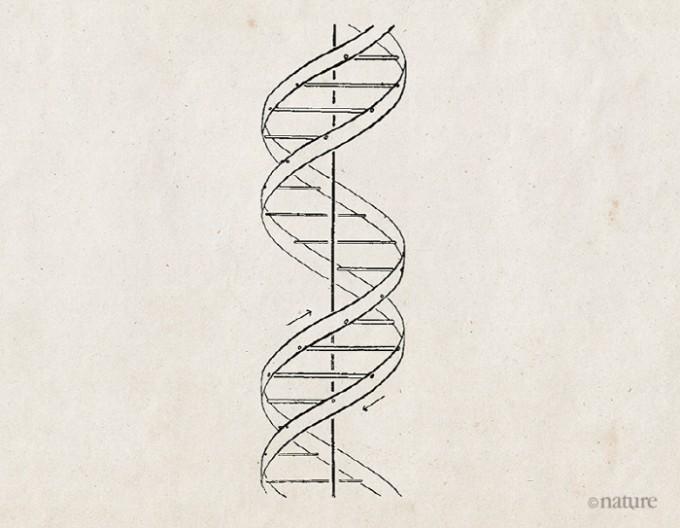 1953년 생물학자 제임스 왓슨과 프랜시스 크릭이 처음 제안한 DNA의 이중나선 구조. 네이처 제공