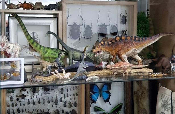 내 방 책장의 모습이다. 어렸을적 부터 모은 곤충 표본과 공룡 피규어로 가득 차 있다. 김도윤 작가 제공