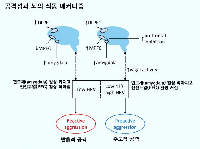 공격성은 반응적 공격(reactive aggression)과 주도적 공격(proactive aggression)으로 나뉘는데, 뇌의 작동 메커니즘이 전혀 다르다. 반응적 공격을 할 때는 편도체(amygdala) 활성이 커지고 전전두엽(PFC) 활성이 작아지는 반면 주도적 공격을 할 때는 그 반대가 된다. 인간은 반응적 공격을 자제하고 주도적 공격을 능숙하게 할 수 있게 진화했다. '심리 범죄 및 법률' 제공