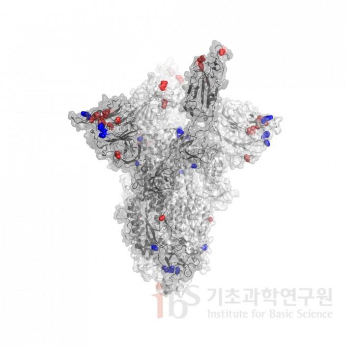 남아프리카공화국에서 발견된 코로나 바이러스 변이(빨간색)와 영국에서 발견된 코로나 바이러스 변이(파란색) 비교