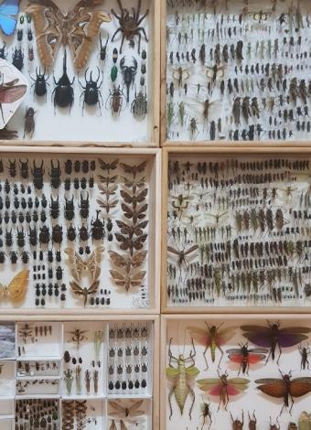 다년간의 노력으로 내가 채집하고 모아온 곤충 표본이다. 김도윤 작가 제공