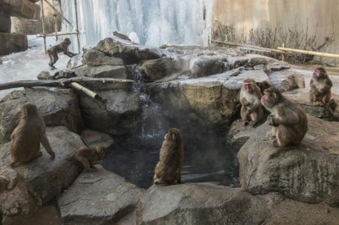 마승애 수의사가 환경 개선 작업에 참여한 에버랜드 동물원의 몽키밸리. 에버랜드 동물원 제공