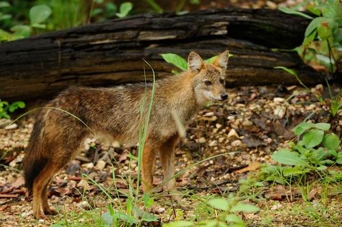 인간 탓 일부 동물 이동량 70% 더 늘며 '고단한' 생존