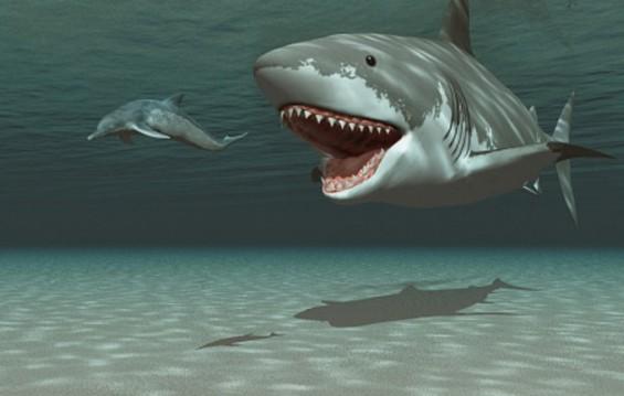 메갈로돈의 '거대한 이빨' 의외로 약했다?
