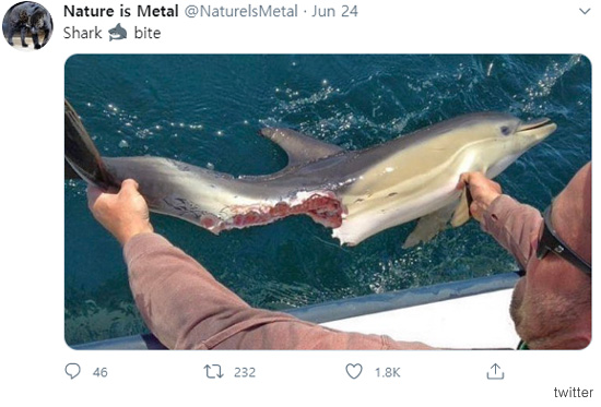 상어는 무서운 동물이다