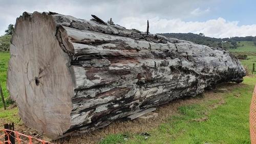 지구 자극 역전이 초래한 기후변화가 네안데르탈인 멸종 원인