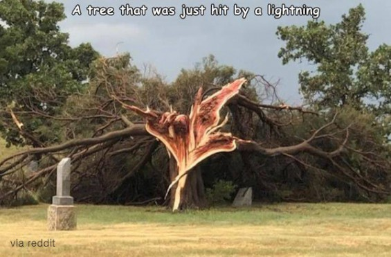 번개를 맞은 나무 '화제'