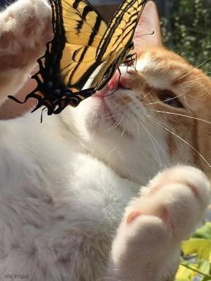 나비와 만난 고양이