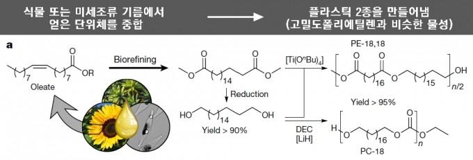 최근 독일의 화학자들은 석유가 아닌 식물 또는 미세조류의 기름(왼쪽)에서 단위체를 얻어(가운데) 이를 중합해 고밀도폴리에틸렌과 물성이 비슷한 플라스틱 2종(PE-18,18과 PC-18)을 만들었다(오른쪽). 이들 플라스틱은 다 쓴 뒤 가용매분해를 통해 다시 단위체로 바꿀 수 있어 화학적 재활용이 가능하다. 네이처 제공