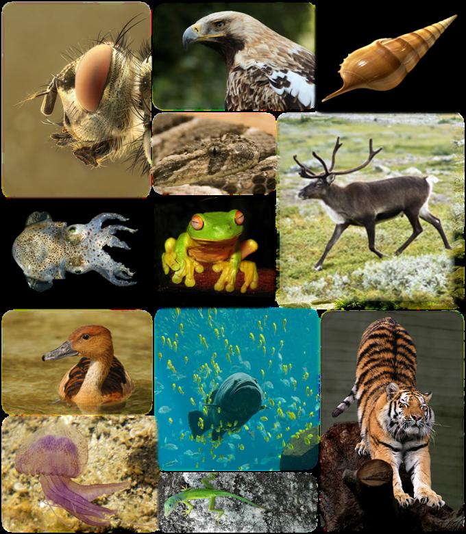 생물다양성은 자연계에 존재하는 생물의 다양성으로 종간의 다양성, 종 내의 다양성을 모두 포포괄한다. 과학자들은 위키피디아와 소셜네트워크서비스 등을 생물다양성 연구에 활용하고 있다. 위키미디어 제공