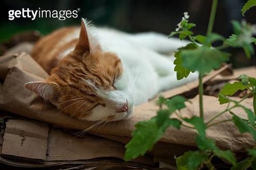 고양이 좋아하는 '캣닙' 모기쫓는 작용 과학적으로 밝혀져