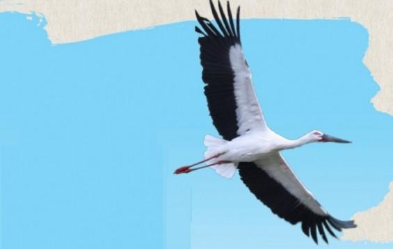 [애니멀리포트]멸종 위기 딛고 펼친 하얀 날갯짓