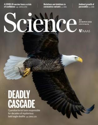 [표지로 읽는 과학] 먹이사슬 타고올라간 '신경독' 최상위 포식자 위협하다