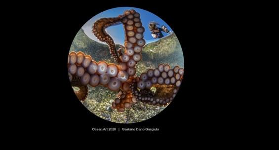 [화보+]'찰칵' 바다문어가 촉수로 찍은 셀피