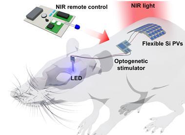 피부에 이식한 태양전지로 빛 만들어 뇌 기능 조절한다