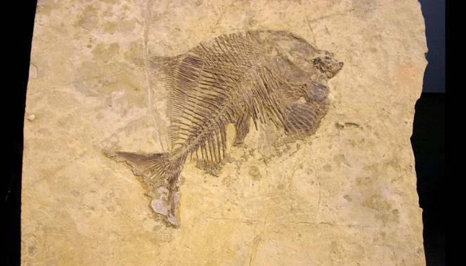 점진론과 달리 화석기록이 연속적이지 않아 보였던 단윈은 화석기록 자체가 불완전하다는 결론을 내렸다. 그러나 단속평형론에서는 실제로 진화가 급변하는 양상을 띠었기 때문이라고 반박한다. 과학동아 DB