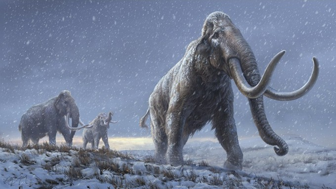 최근 100만 년이 넘는 매머드 어금니 두 점에서 추출한 DNA에서 게놈 정보를 얻은 데 성공했다. 그 결과 하나는 털매머드로 밝혀졌고 다른 하나는 미지의 계통으로 밝혀졌다. 놀랍게도 이들의 후손이 약 42만 년 전 만나 그사이 태어난 잡종이 컬럼비아매머드인 것으로 밝혀졌다. 지금까지는 100만 년 전에는 스텝매머드만 존재했고 그 뒤 털매머드와 컬럼비아매머드가 진화했다는 게 유력한 학설이었다. 매머드를 묘사한 상상도다. (제공 Beth Zaiken/Centre for Palaeogenetics)
