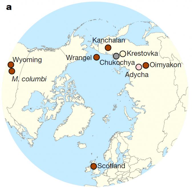  다양한 매머드의 형태와 크기를 비교한 이미지로 왼쪽부터 털매머드, 피그미매머드, 컬럼비아매머드, 스텝매머드, 남부매머드다. 크기 비교를 위해 맨 왼쪽에 사람이 그려져 있다. 위키피디아 제공