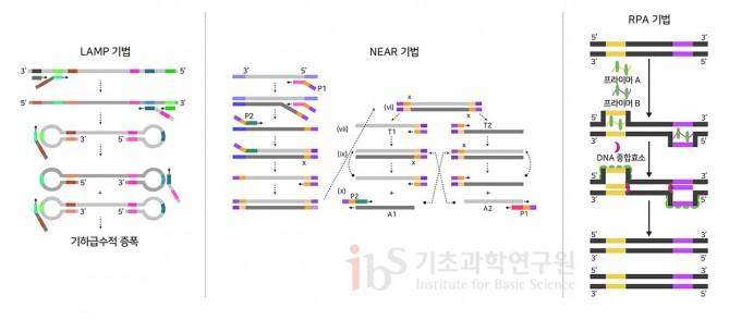 등온증폭법의 세 가지 사례. 등옹증폭법은 특수하게 설계된 DNA 프로브를 사용하여 일정한 온도에서 형광신호를 증폭시키는 방법이다. 형광신호를 토대로 코로나19 감염 여부를 파악할 수 있다. IBS 제공