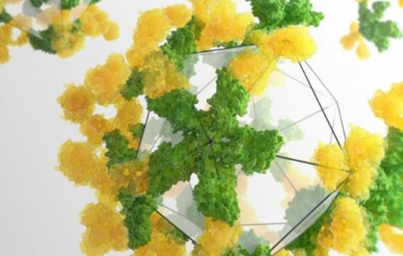 [표지로 읽는 과학] 단백질 설계 인간계 '지존'이 만든 '항체 케이지'