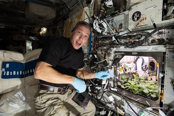 크루-1 임무의 사령관인 마이크 홉킨스는우주 환경에서 재배한 식물의 영양가, 성장에 영향을 주는 요인 등을 평가했다. NASA 제공
