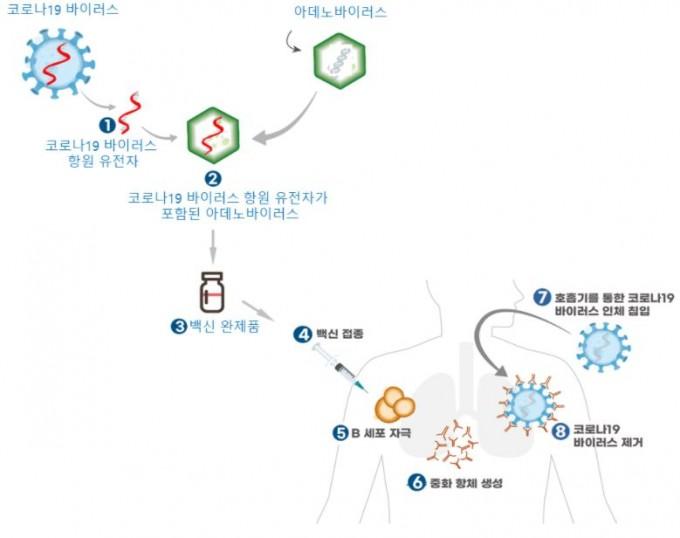아데노바이러스를 이용한 바이러스 벡터 백신의 원리. 식품의약품안전처 제공