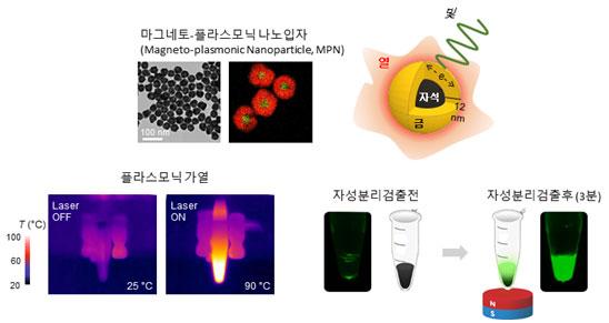 IBS 나노의학 연구단은 플라스모닉물질과 자성물질을 결합한 '마그네토 플라스모닉 나노입자'를 합성하고, 이를 PCR에 접목한 나노PCR 기술을 개발했다. 플라스모닉 효과로 인해 유전물질을 빠르게 증폭하는 동시에 자기력을 이용해 샘플을 분리할 수 있다. IBS 제공