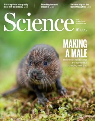 [표지로 읽는 과학] Y 염색체 없는 들쥐는 어떻게 수컷을 결정할까