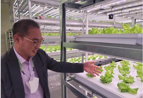 '햇빛 없어도 거뜬'…365일 채소 생산 스마트팜 '식물 공장'